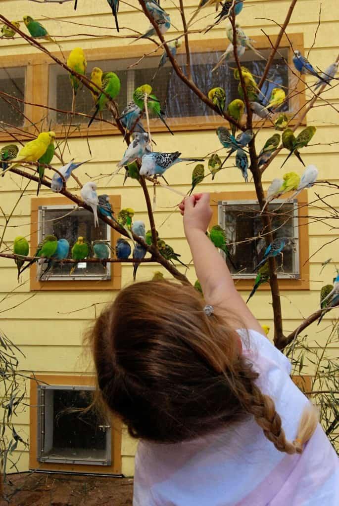 isabella-loves-birds